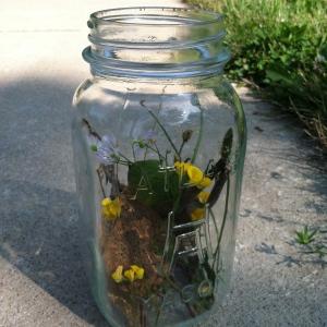 """My """"bug jar"""""""