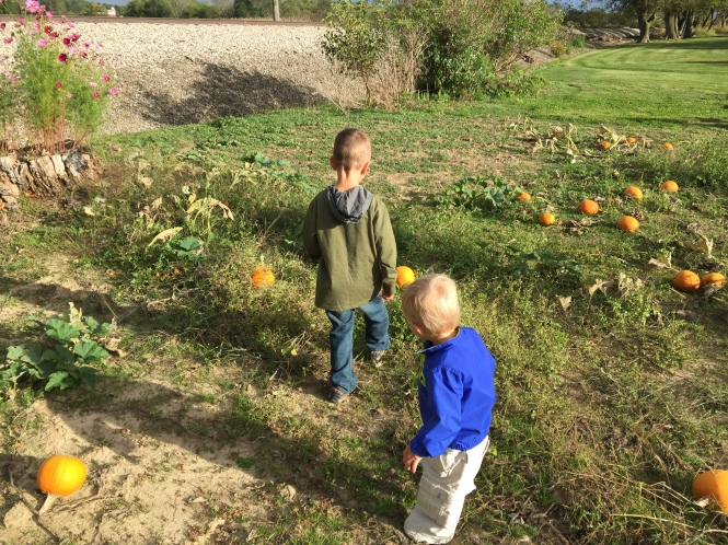 Picking Pumpkins - Our First Fall Family Activity of the Season